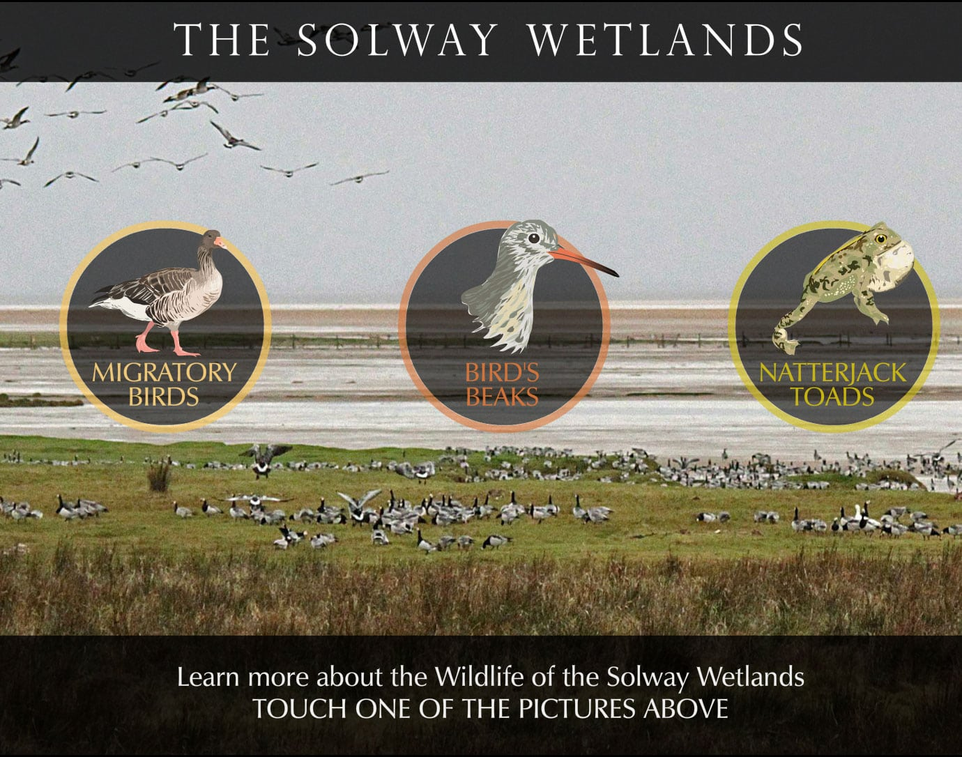solway wetlands touchscreen interactive